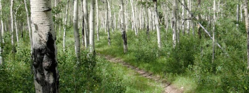 slider-woods
